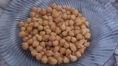 germinated : sprouted chickpea close up zoom in Stock Footage