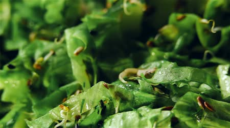 vejetaryen : Vegetarian fresh rotating green salad with sprouts and seed Stok Video