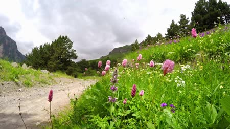 wildflowers : Beautiful bright wildflowers swaying in the wind in an alpine meadow on the hillside