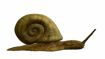jardim : Snail walking on a white background
