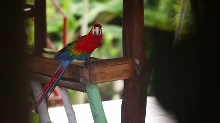 escarlate : Beautiful Red Parrot