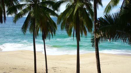 natura : Tropical beach Wideo