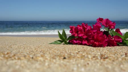 natura : Tropical Beach Flowers Wideo