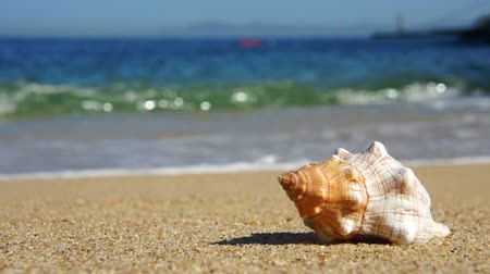 Seashell Stockvideo