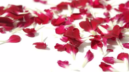 dates : Red Falling flower petals