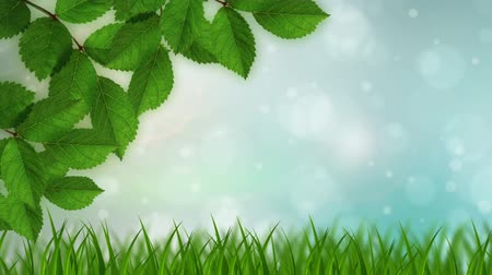 natura : Nature Background