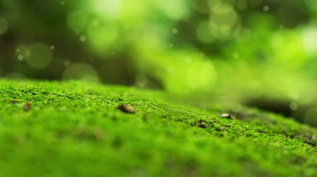 natura : Moss Bokeh Dot Background Wideo