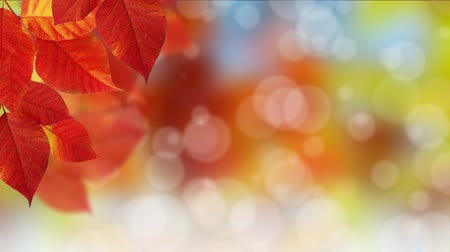 autumn : Fall Bokeh Dot Background Stock Footage