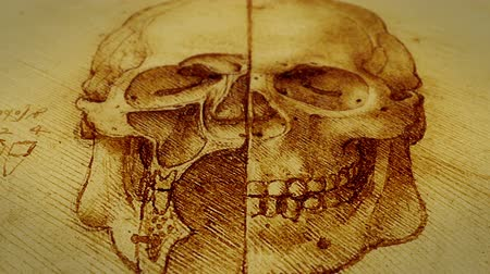 biológia : A dolly shot of Leonardo da Vinci Skull sketch