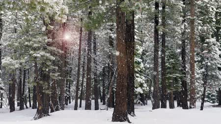 télen : Sun lighting up the forest on a cold winters day