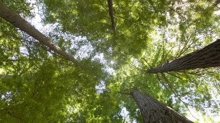 natural tranquil : Camera spinning through trees