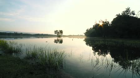 dewy : Tranquil lake view at sunrise. Fog over the water in the morning. Feels cool and refreshing Stock Footage