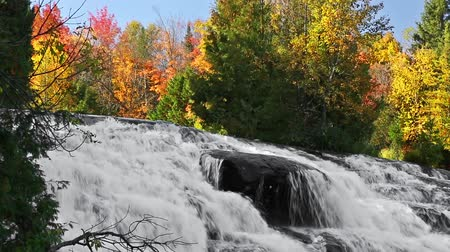 arbol : Bucle. Bond Falls, una cascada en Michigan Archivo de Video
