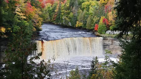 destaque : Tahquamenon falls, a tannin-stained waterfall in Michigans eastern Upper Peninsula, is featured in this seamless loop with beautiful fall foliage in the surrounding forest.