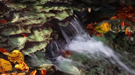 ribeiro : Water flows over a limestone ledge in a creek surrounded by colorful fall leaves in this seamless loop.