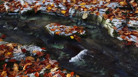 ток : Water flows through a channel it has cut through limestone with colorful fall leaves all around in this seamless loop.