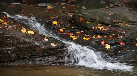 waterfall cascading into pool : Whitewater splashes down into a pool through a rocky channel with colorful fall leaves here and there. Seamlessly looping.