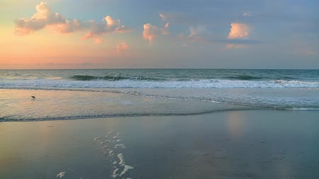 fala : Waves break on a sandy beach in colorful early morning light as a shorebird forages in the surf. Looping.