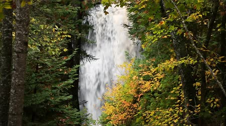 pictured : A powerful waterfall is seen through the trees in the woods of Upper Peninsula Michigan. This looping video was shot at Miners Falls in Pictured Rocks National Lakeshore.