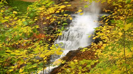 upper peninsula : Video loop features a waterfall, Munising Falls in Michigans Pictured Rocks National Lakeshore, slashing down in the midst of colorful autumn leaves. Stock Footage