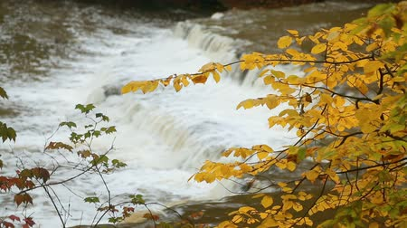 plunging : Loop features the splashing whitewater of an Ohio waterfall viewed through colorful autumn leaves.