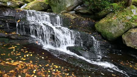 jumble : Seamless loop features a waterfall on Shays Run, a stream in West Virginias Blackwater State Park.