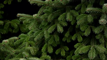 ramos : Fir tree view of a bottom-up