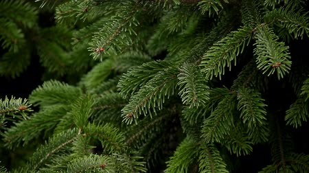 Evergreen Christmas tree full frame Stock Footage