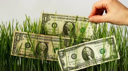 Female hand puts a dollar on the sprouted grass to increase money Stock Footage
