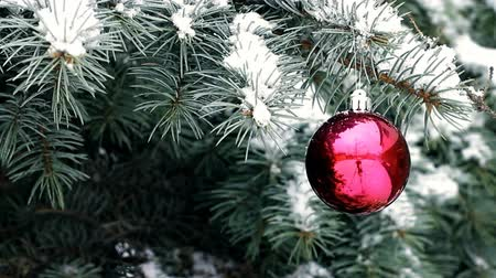Red Christmas ball hanging on blue spruce branch in snowy weather outdoor Wideo
