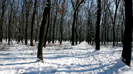 In winter in forest. After the snowfall is beautiful and quiet