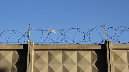 Concrete fence with barbed wire Wideo