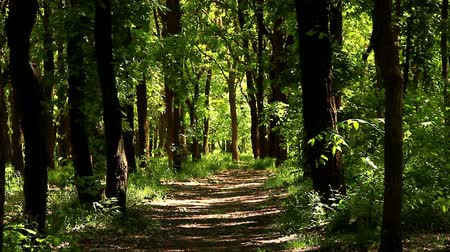 yumuşaklık : Grove is flooded in the sunlight. Early May, lush greenery in forest