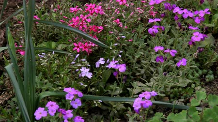 vernal : Gentle summer flowers bloom in the flower bed