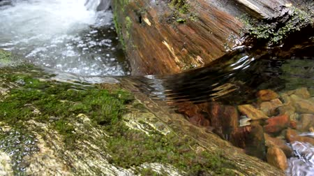 mohás : Water flowing in a creek runs over and around a log immersed in water