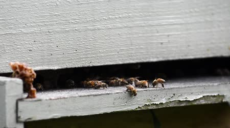 hive : Bees fly around the entrance of a wooden beekeeping box