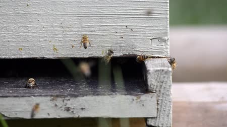 hive : Bees enter a wooden beekeeping box shot with a sliding motion