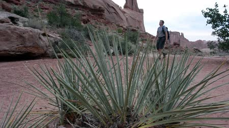esquerda : Yucca plant blows in the wind while a man walks from right to left in the background.