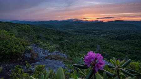 rhododendron : Time Lapse of Blue Ridge Parkway Sunset with Rhododendron
