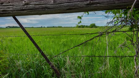 farpado : TL Minnesota - Farm Fence alongside green field Stock Footage
