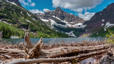 montana : TL Glacier - Two Medicine Logs and Pond at Upper Two Medicine Lake Stock Footage
