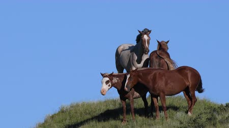 pastar : Wild Horses Standing in the Wind Against Blue Sky
