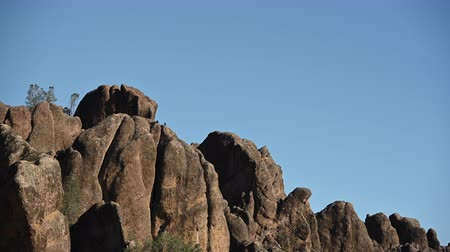 Multiple California Condors on the Rocks of Pinnacles in National Park