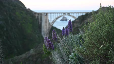 Purple Flowers And Bixby Creek Bridge Along Bur Sur Coast