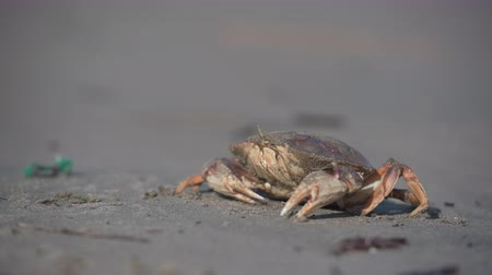 driftwood : Shallow Focus of Crab on The Beach on Sunny Day