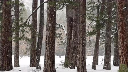 Snow Falls Through Forest at Quarter Speed