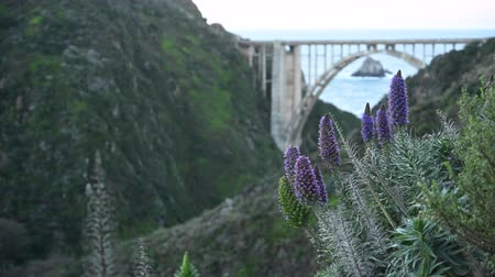 Purple Flowers and Bixby Bridge on California Coast With Copy Space Left Стоковые видеозаписи