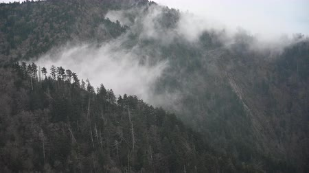 füstös : Clouds Roll Through two mountains in Great Smoky Mountains National Park
