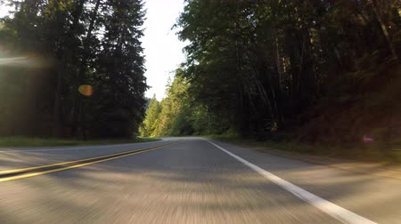 asfalt : Driving Through Pine Forest
