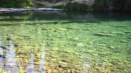 çiftleşme : Trout Break The Surface of Clear Lake in Washington Mountains